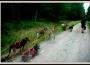 sylvain-cani-kart11-attelage-au-repos