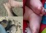 piedsfamille
